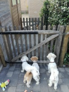 Dogs looking at another dog